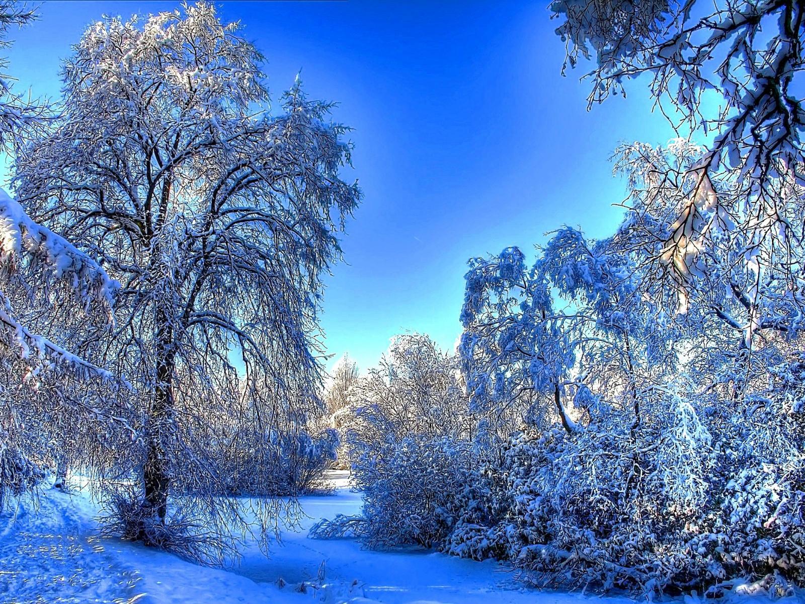 cute winter landscape 1600x1200