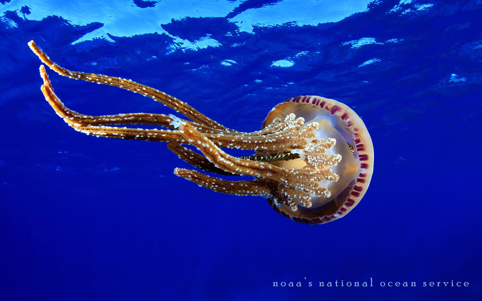 Marine Biology Wallpaper - WallpaperSafari
