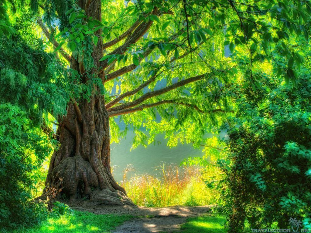 Hd wallpaper nature green - Green Nature Desktop Wallpaper Download Dreamy Green Nature Wallpaper