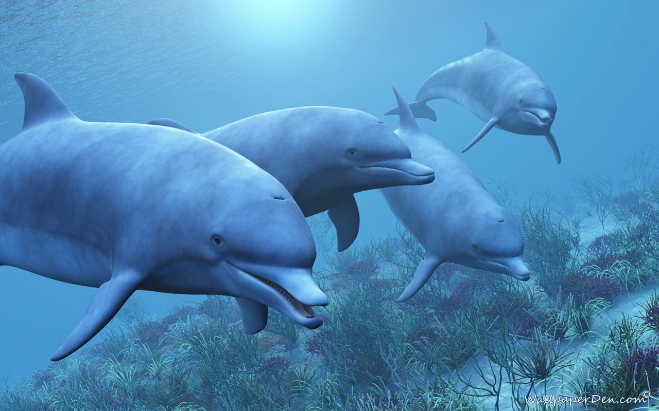 Download Wallpapers Backgrounds   Dolphin Wallpapers Animated 1280x800