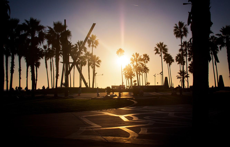 Wallpaper summer california sunset los angeles palm venice 1332x850