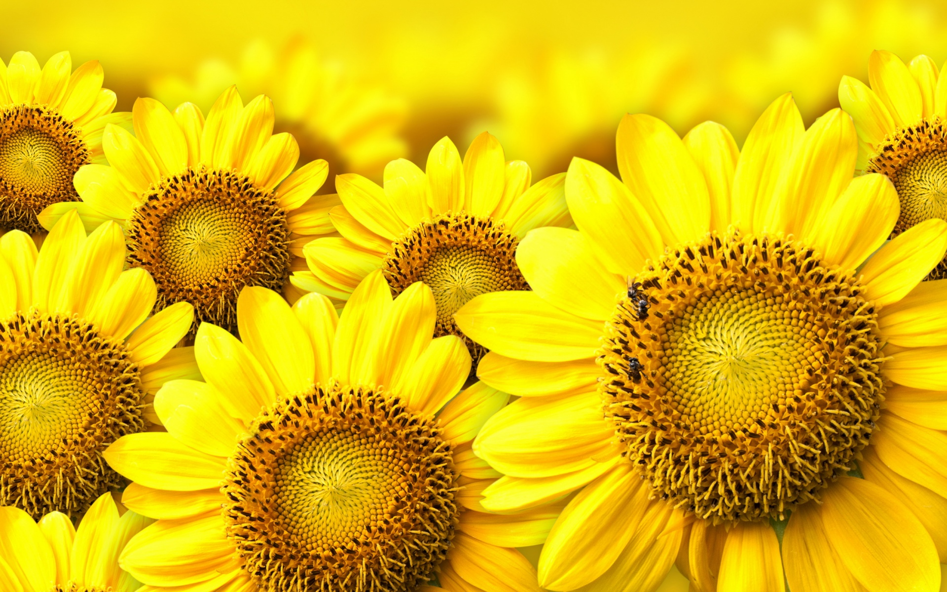 Free Download Yellow Flowers Wallpaper High Definition High
