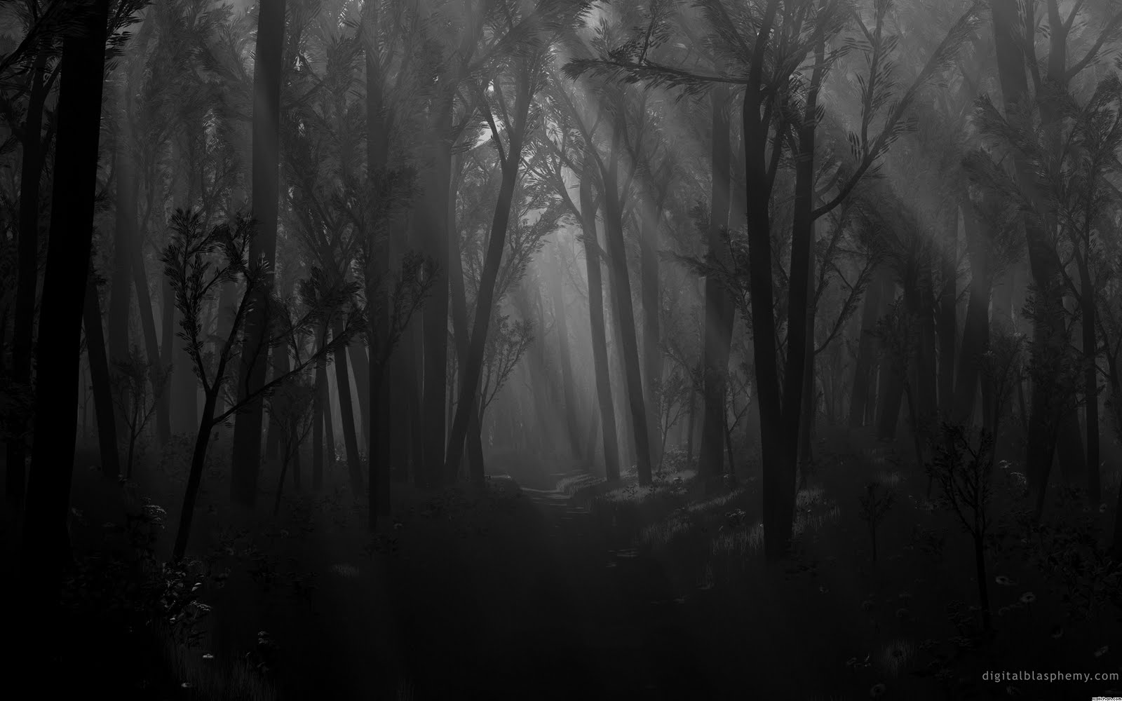 dark forest path shadows spooky monochrome wallpaper wallpaperjpg 1600x1000