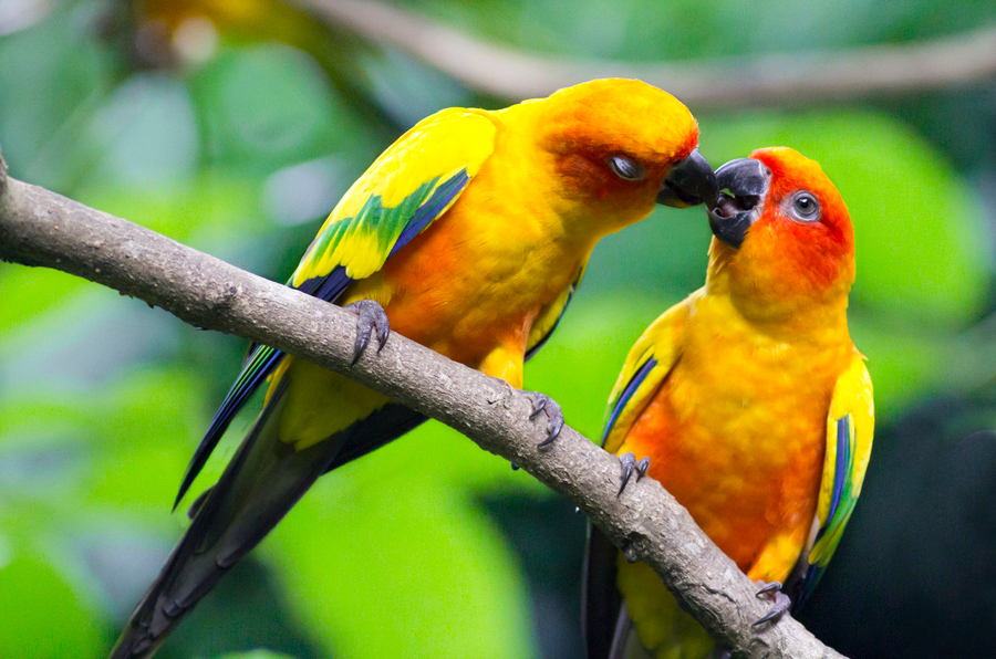 Lovebird Wallpaper Wallpapersafari