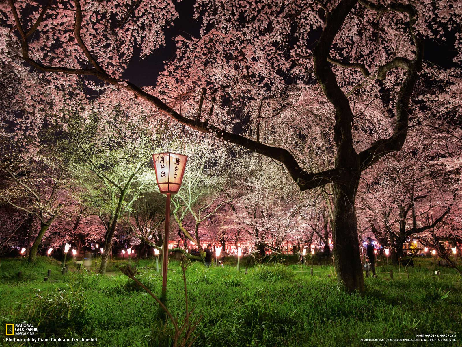 Picture    Garden Wallpaper    National Geographic Photo of the Day 1600x1200