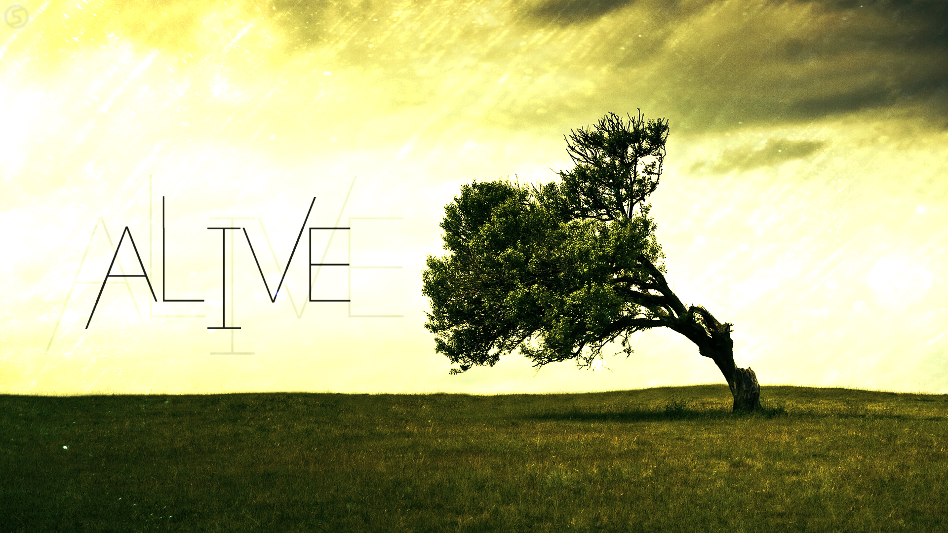 Alive Wallpaper 1920x1080