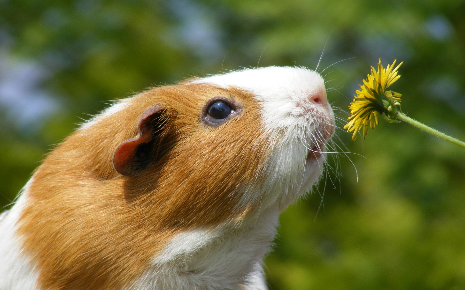 Hamster Desktop Animal Animals wallpapers HD   206871 1920x1200