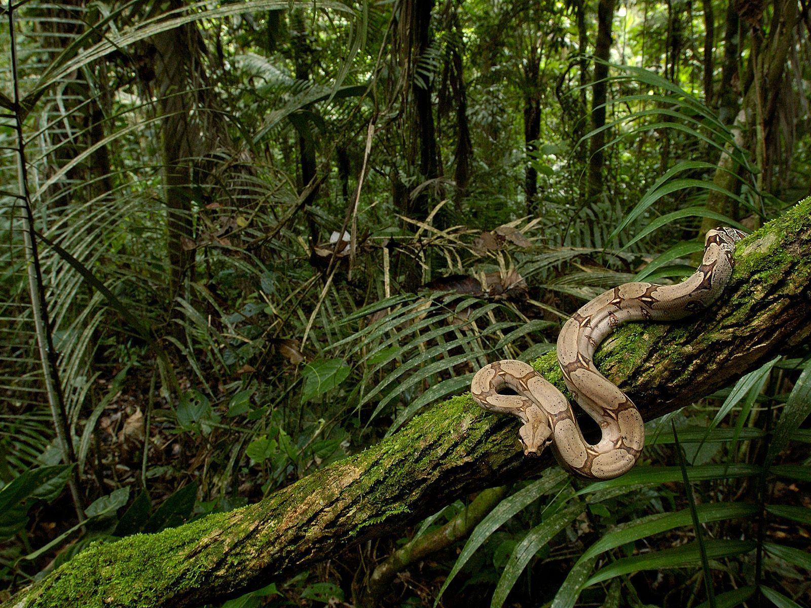 jungle images rainforest   Yahoo Image Search Results jungle in 1600x1200