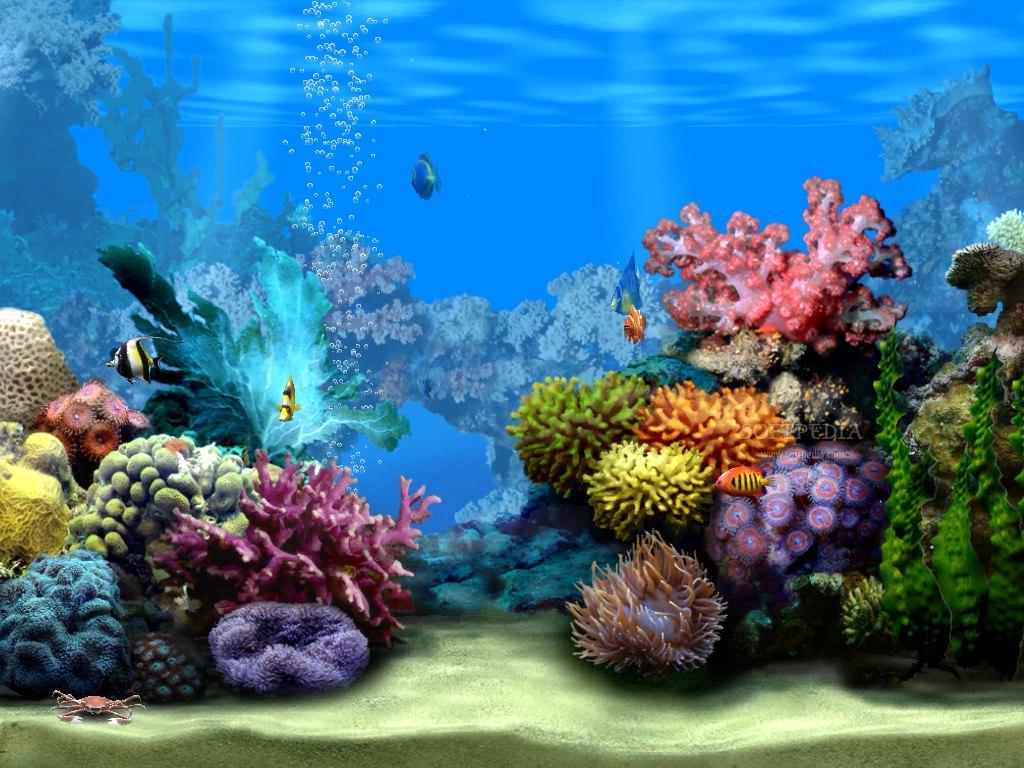 GT Wallpaper   Fond decran aquarium 1024x768