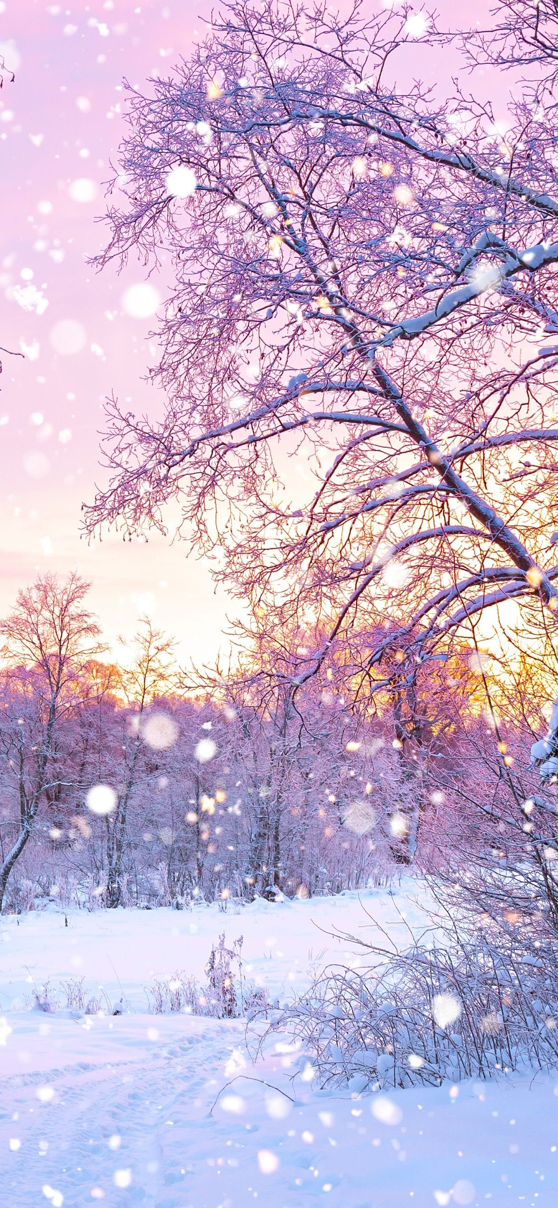 Snow iPhone wallpaper Nature wallpaper Winter wallpaper 1125x2436