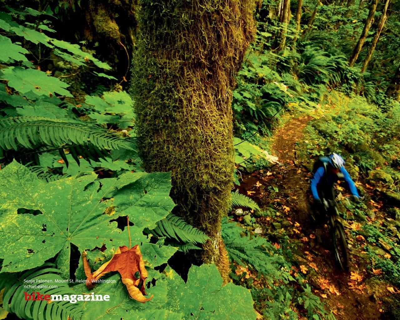 mountain bike in florest 2206 1280x1024jpg 1280x1024