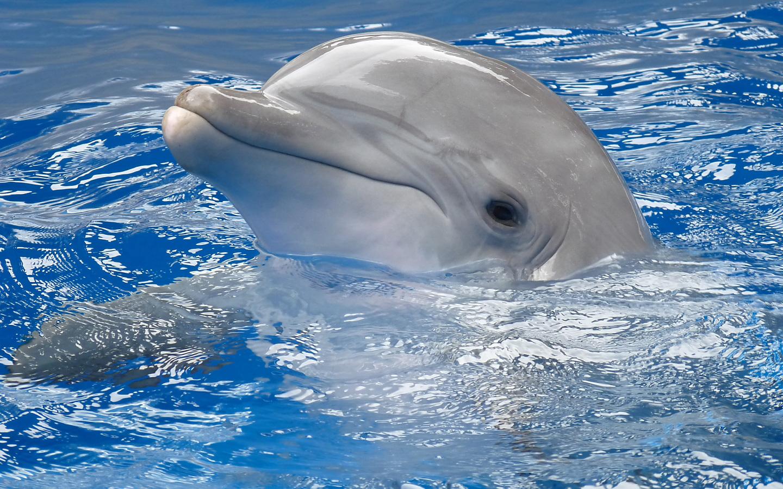 Baby Dolphin   1440x900   1610 1440x900