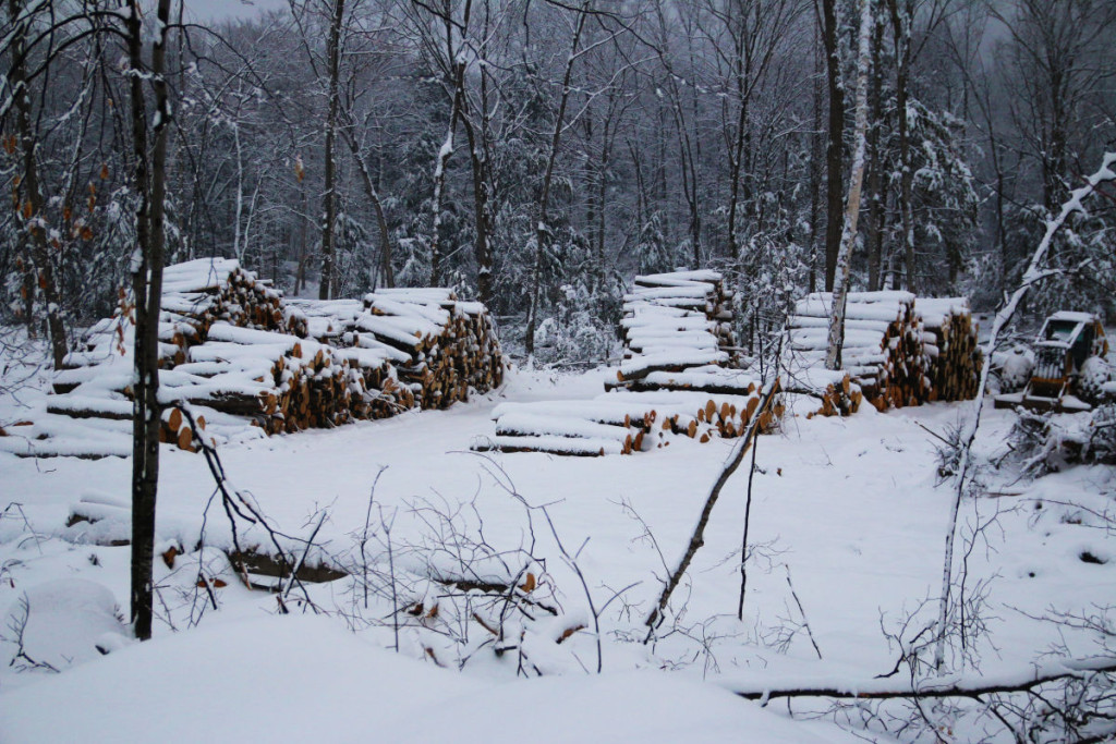 In the winter with snow starkly highlighting each of the fallen trees 1024x683