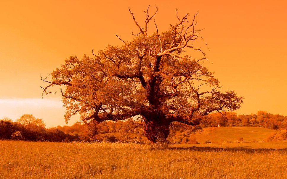 Tree of life wallpaper malick
