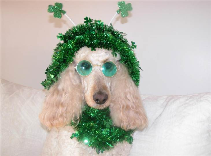 Cute Animal St Patricks Day Wallpaper Your st. patrick's day pets:
