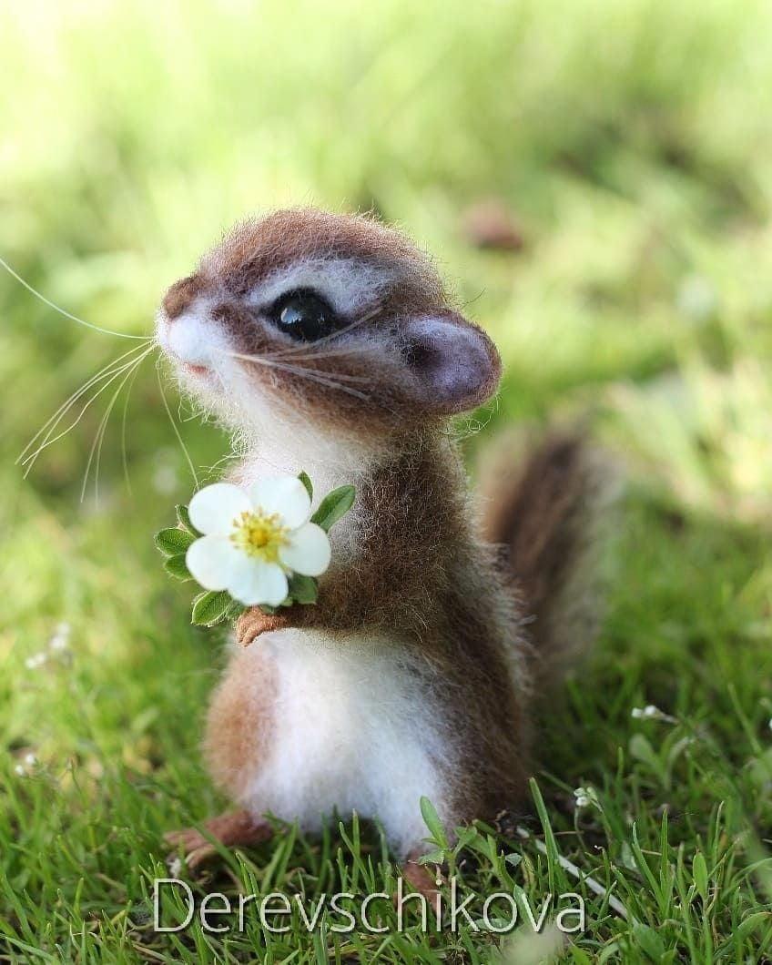 Pin by Deepak on animais mais fofos Animals beautiful Cute 848x1060