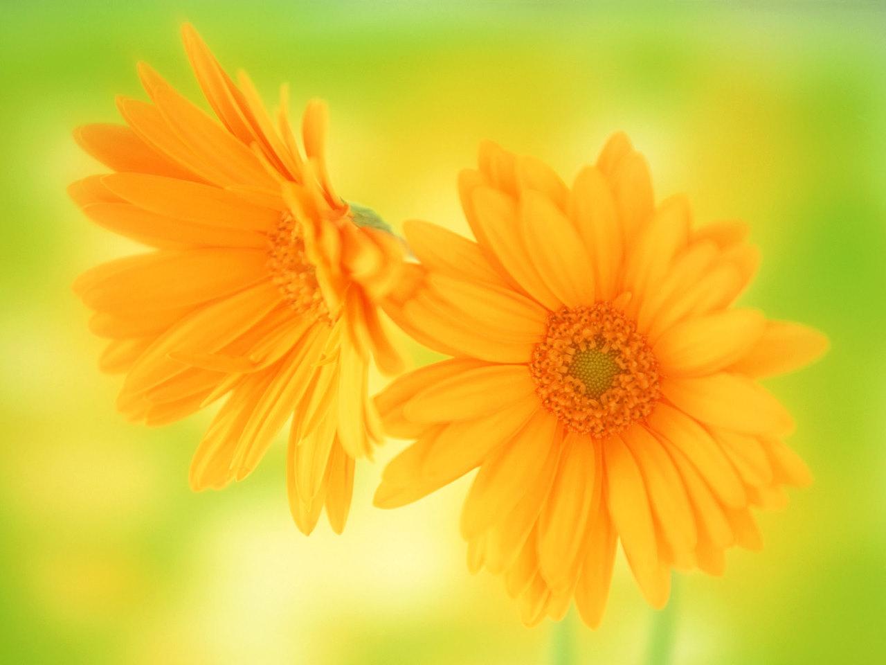 Beautiful Flower Desktop Wallpapers Hd Beautiful flow 1280x960