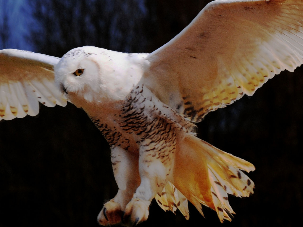 Owl HD Wallpapers Pictures Images Backgrounds Photos 1024x768