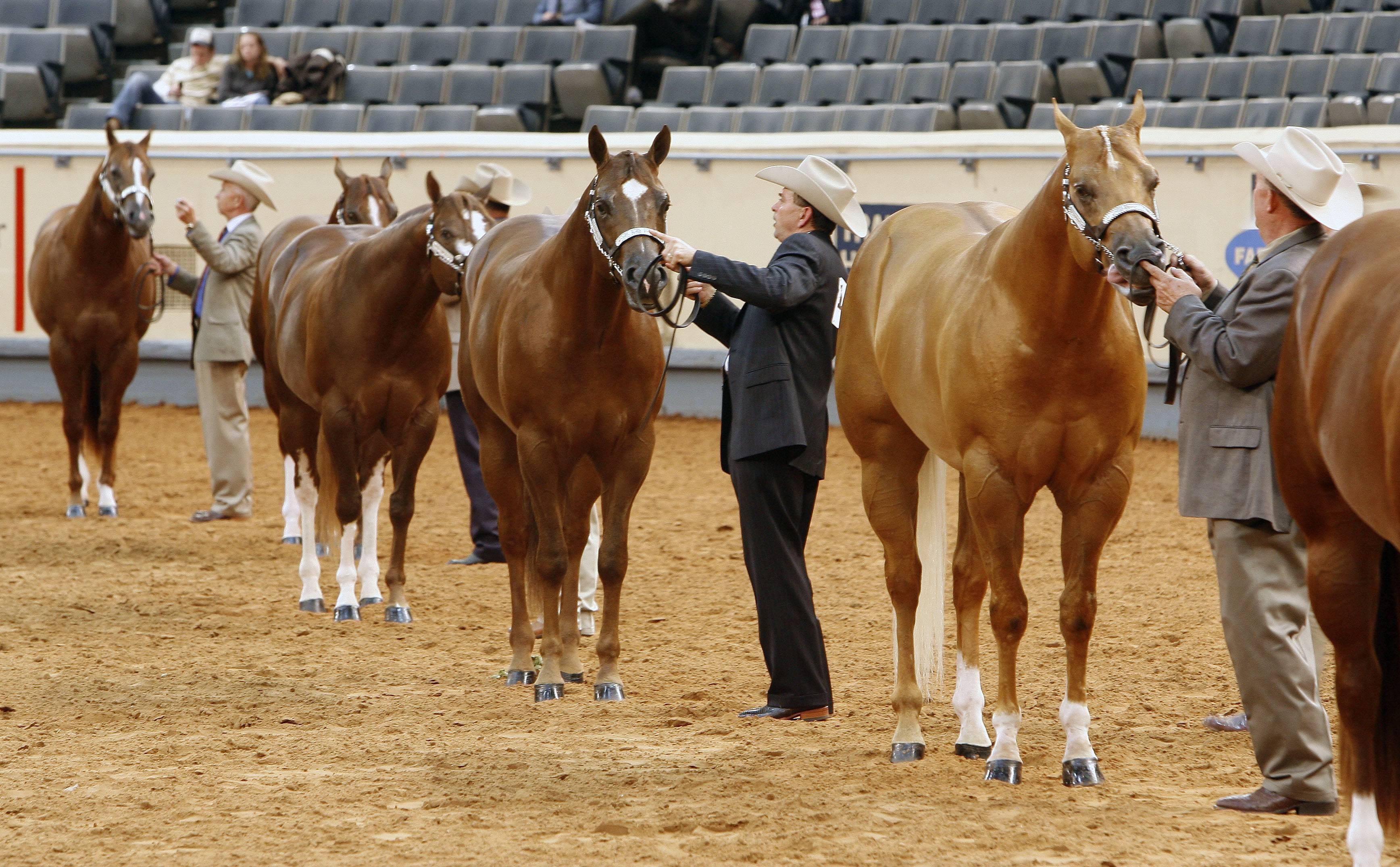 Free Download American Quarter Horse Hd Wallpapers American