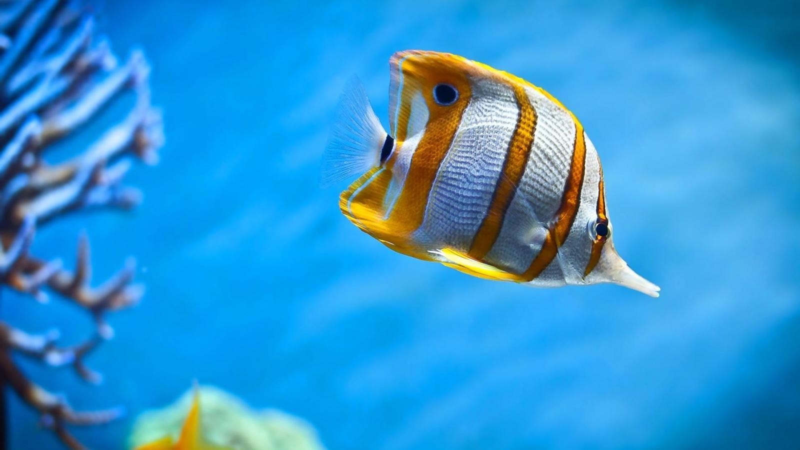 coral reef tropical fish wallpaper   91420   HQ Desktop Wallpapers 1600x900