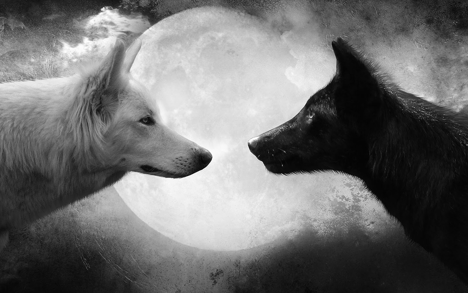 Black and white wallpaper with wolves HD Animals Wallpapers 1600x1000