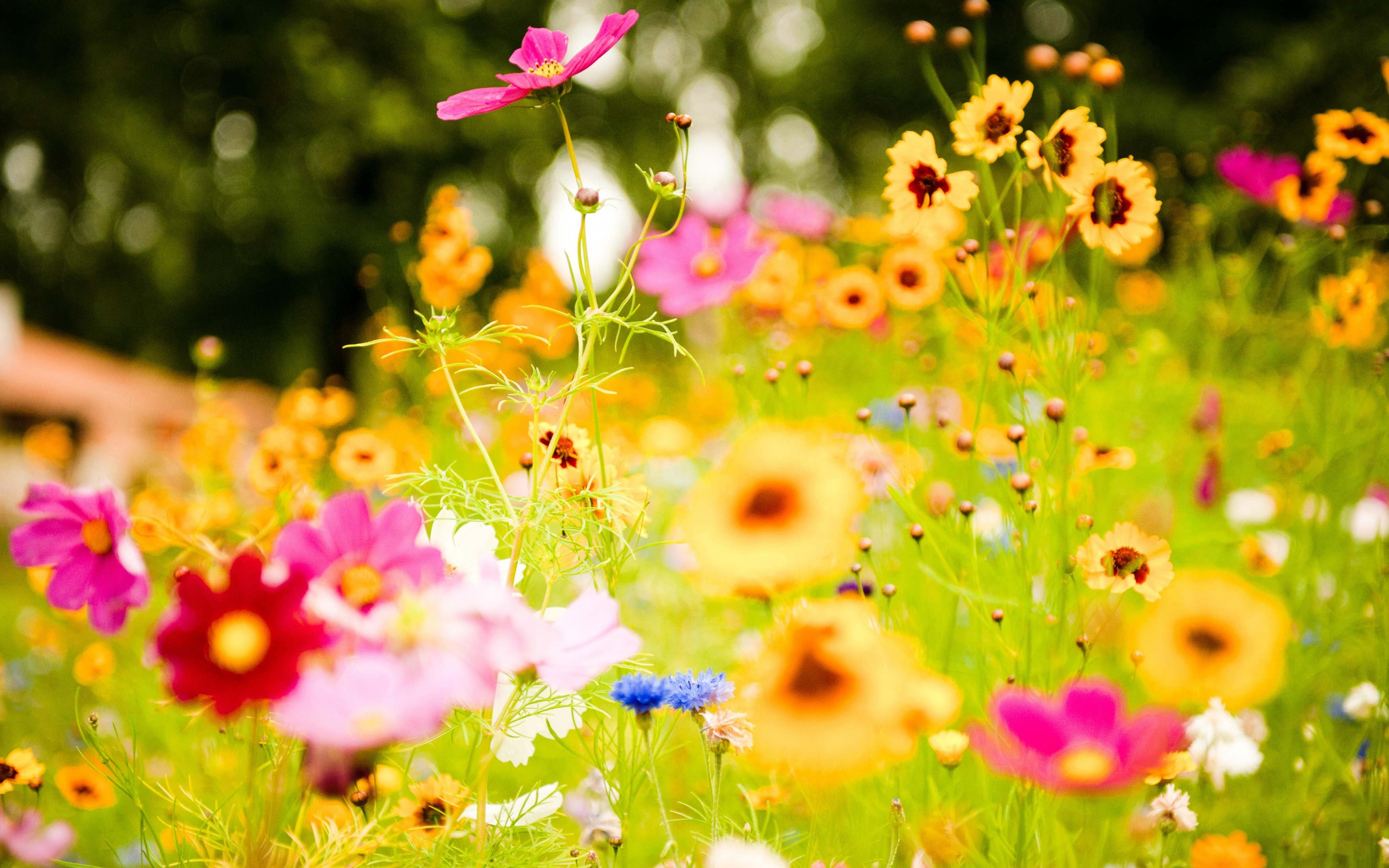 Wild flowers HD Desktop Wallpaper HD Desktop Wallpaper 3500x2188