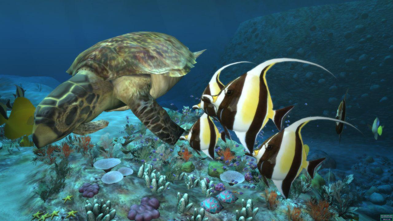 Deep Sea Life Desktop Wallpaper Deep Sea Life Desktop Background 1280x720