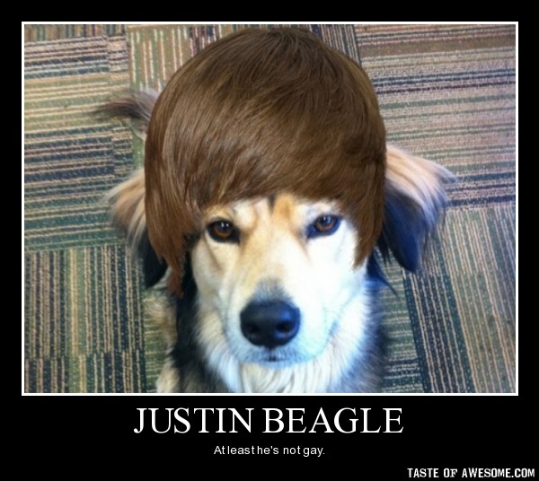 Funny Beagle Wallpaper - WallpaperSafari