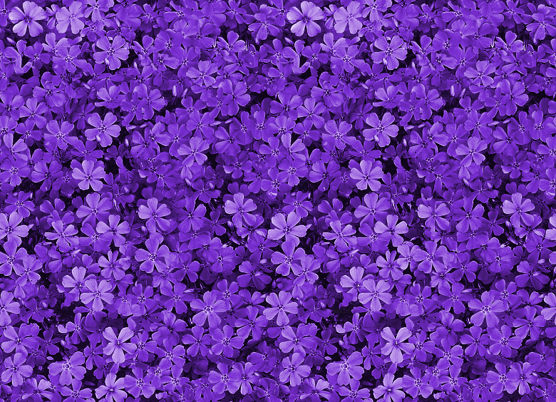 Showing Gallery For Purple Flower Background Tumblr 780x564
