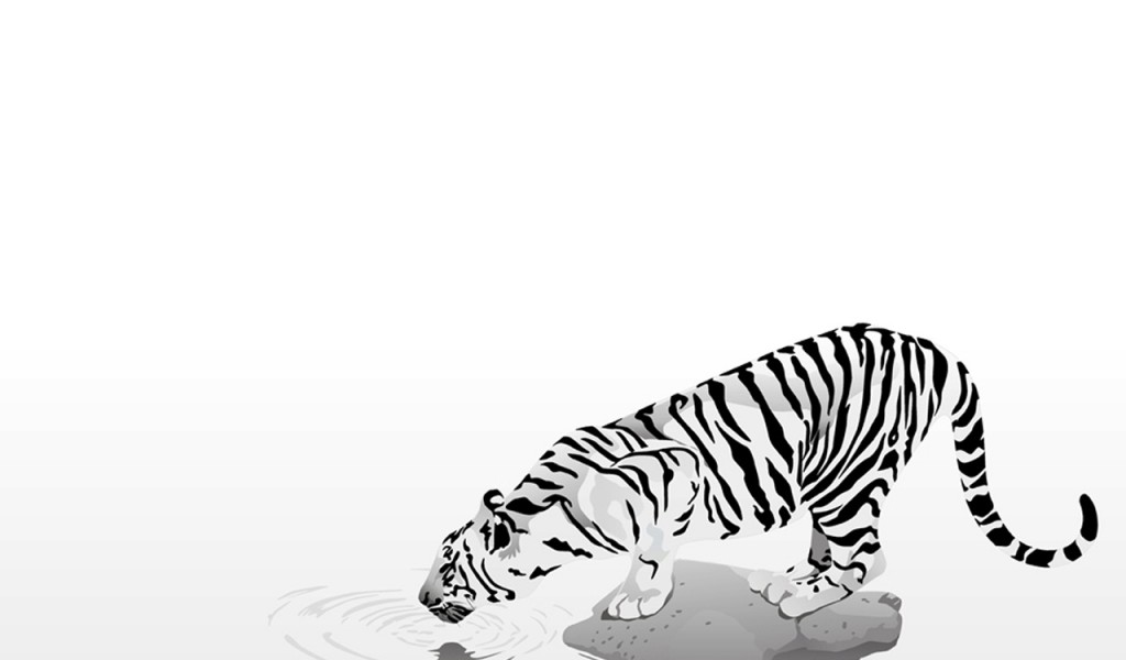 White Tiger Cubs Wallpaper   HD Wallpapers 1024x600