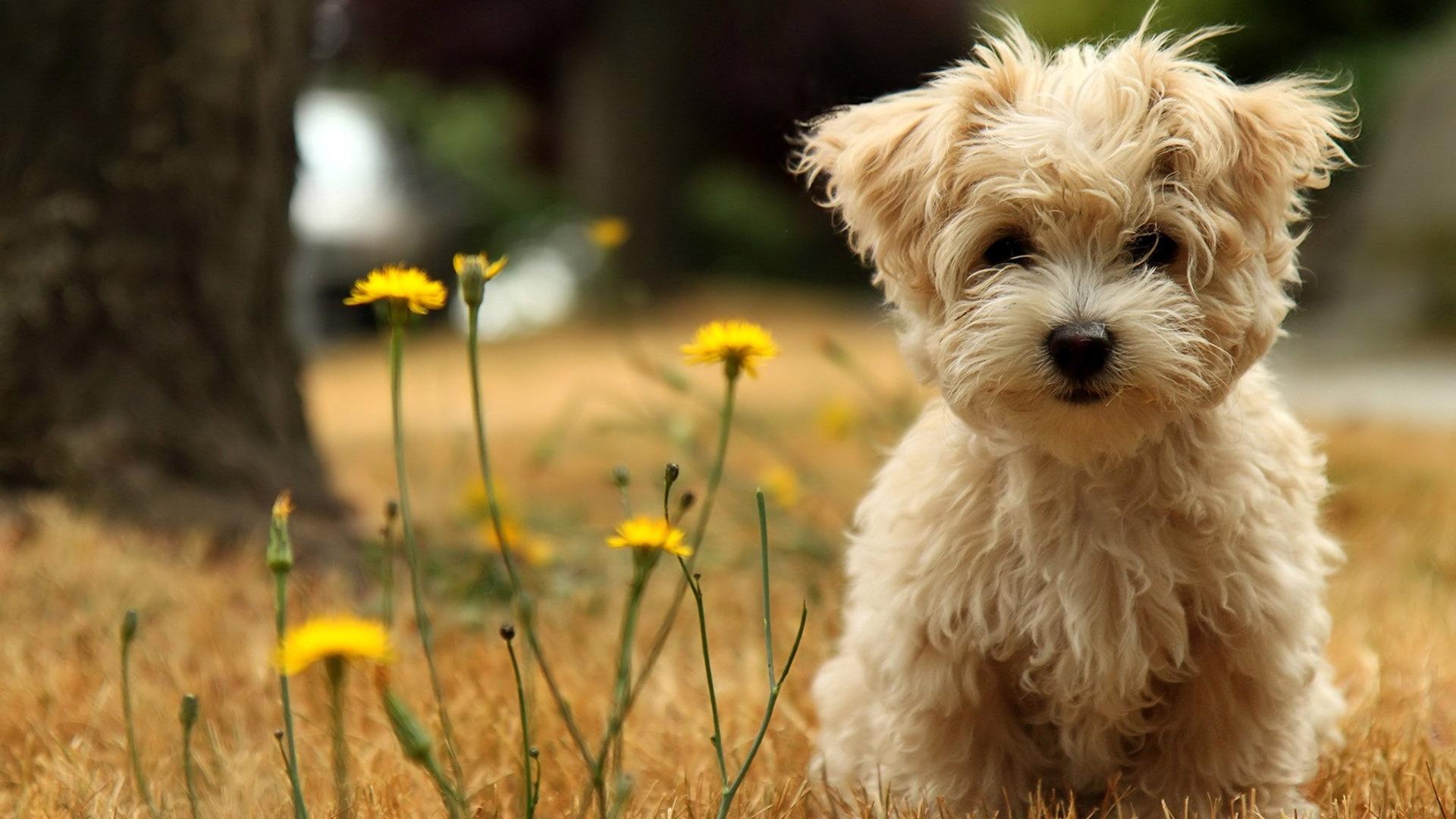 Cute Dog Wallpaper 1920x1080