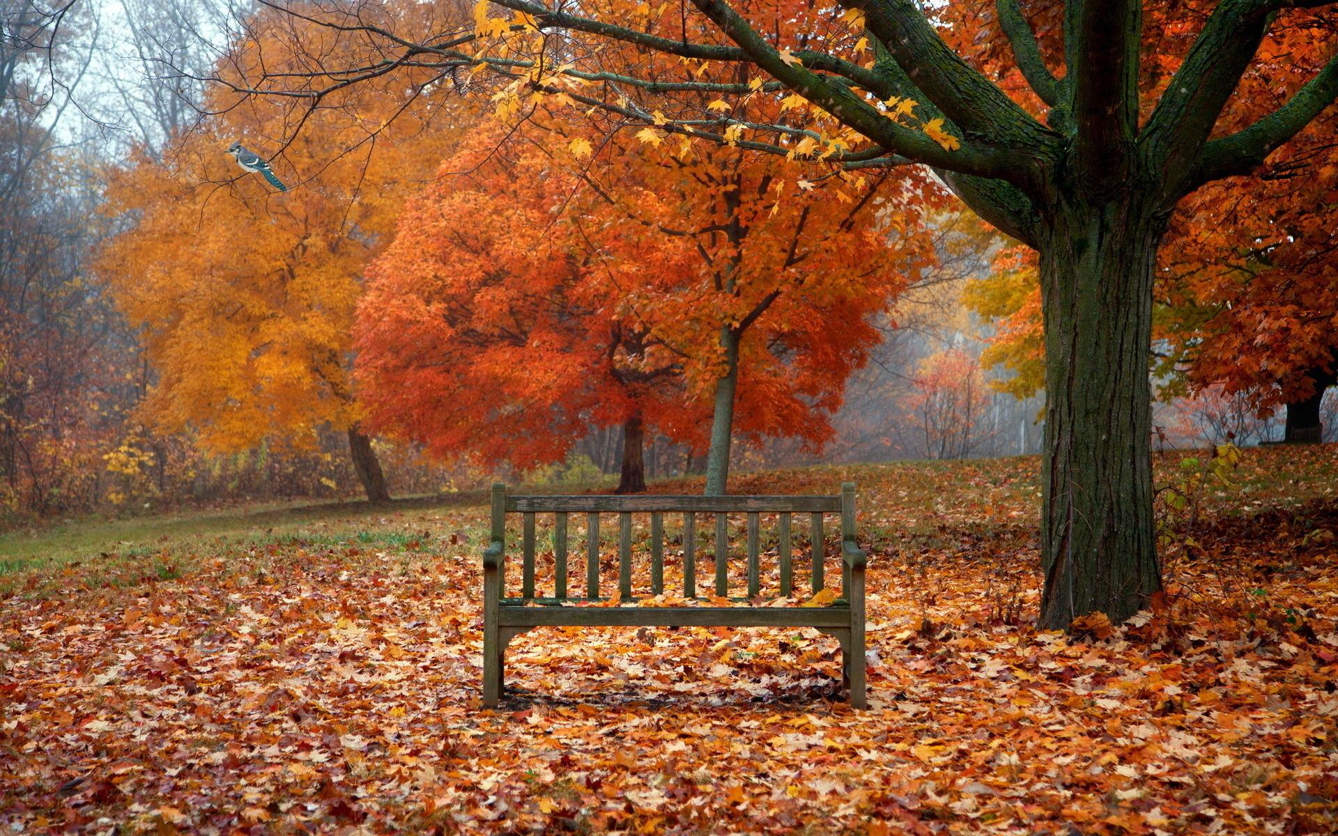 scenes of autumn   Desktop Wallpaper 1920x1200