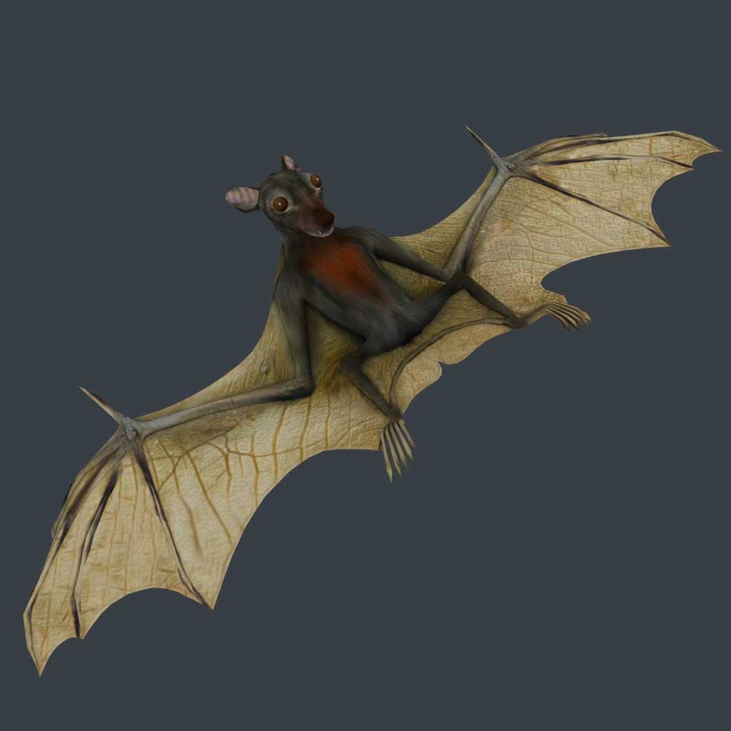 Bat Wallpapers  WallpaperSafari