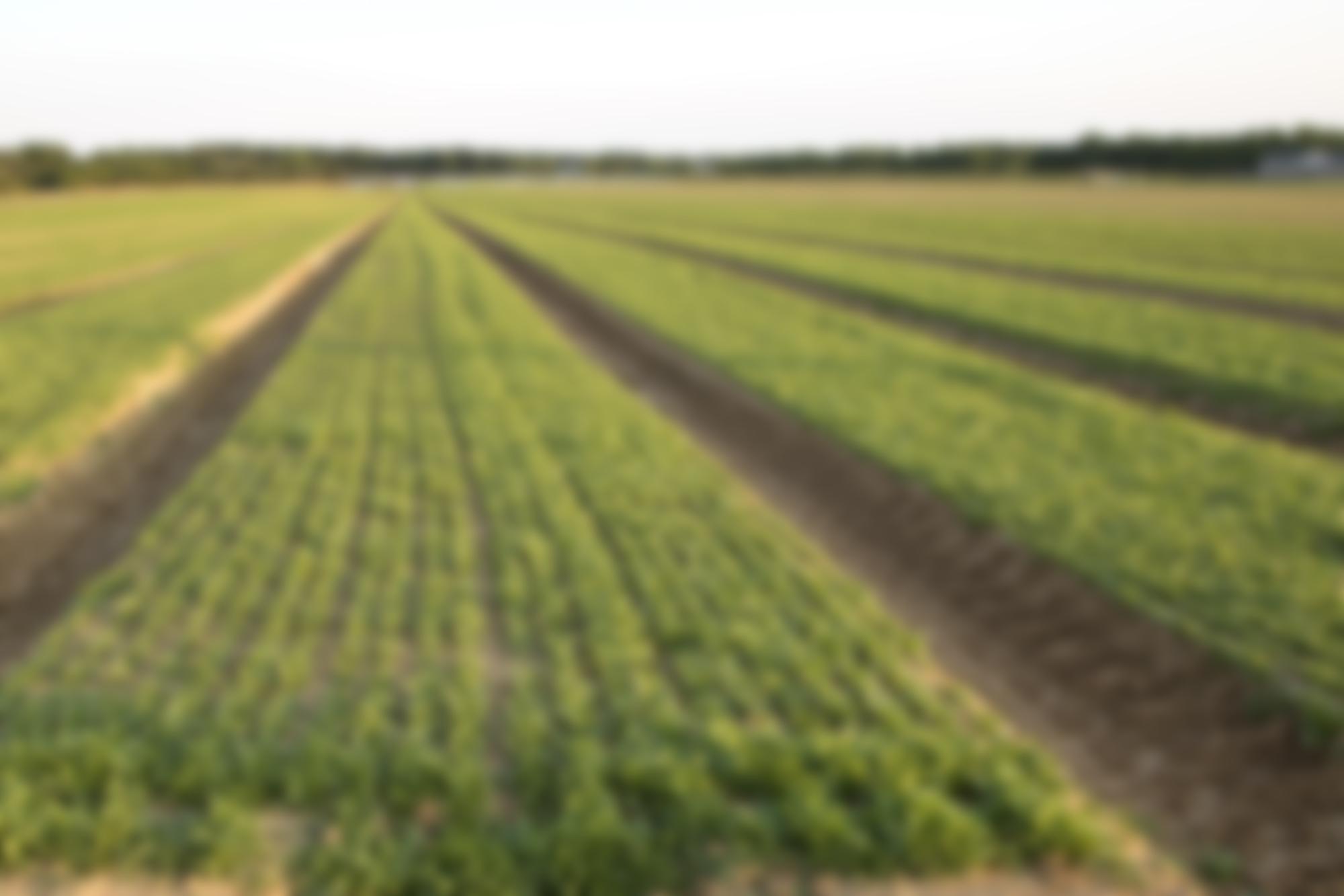 Staff NC Farmworker Health Program 2000x1333