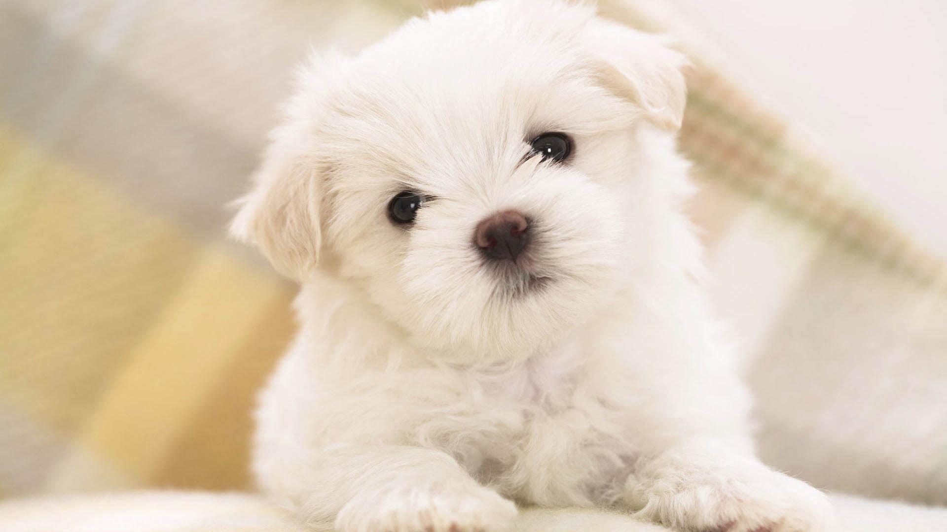 Dogs Wallpaper cute dog wallpapers for desktop - wallpapersafari