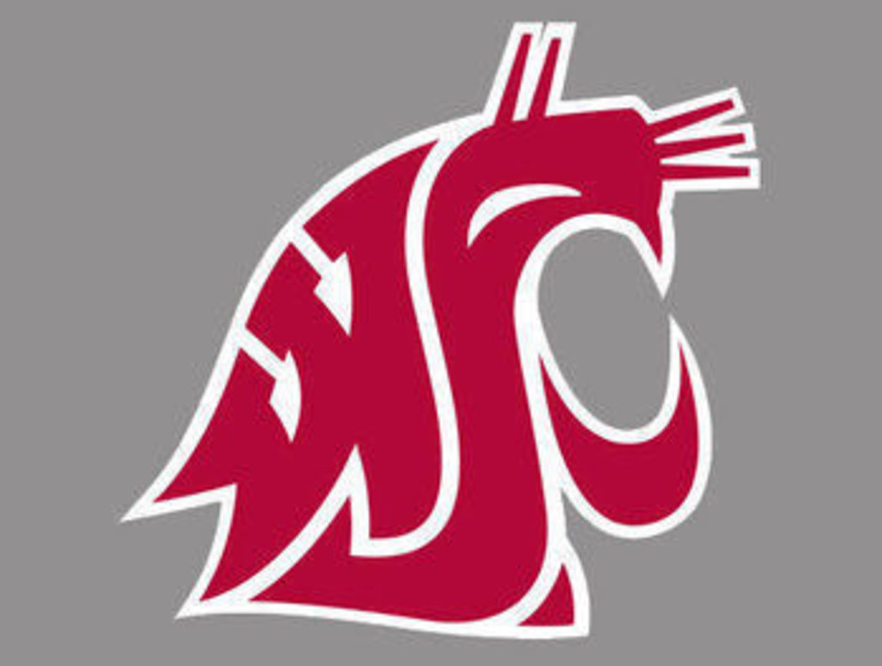 on meaningless tribal tattoo design the Washington State Cougars 1280x966