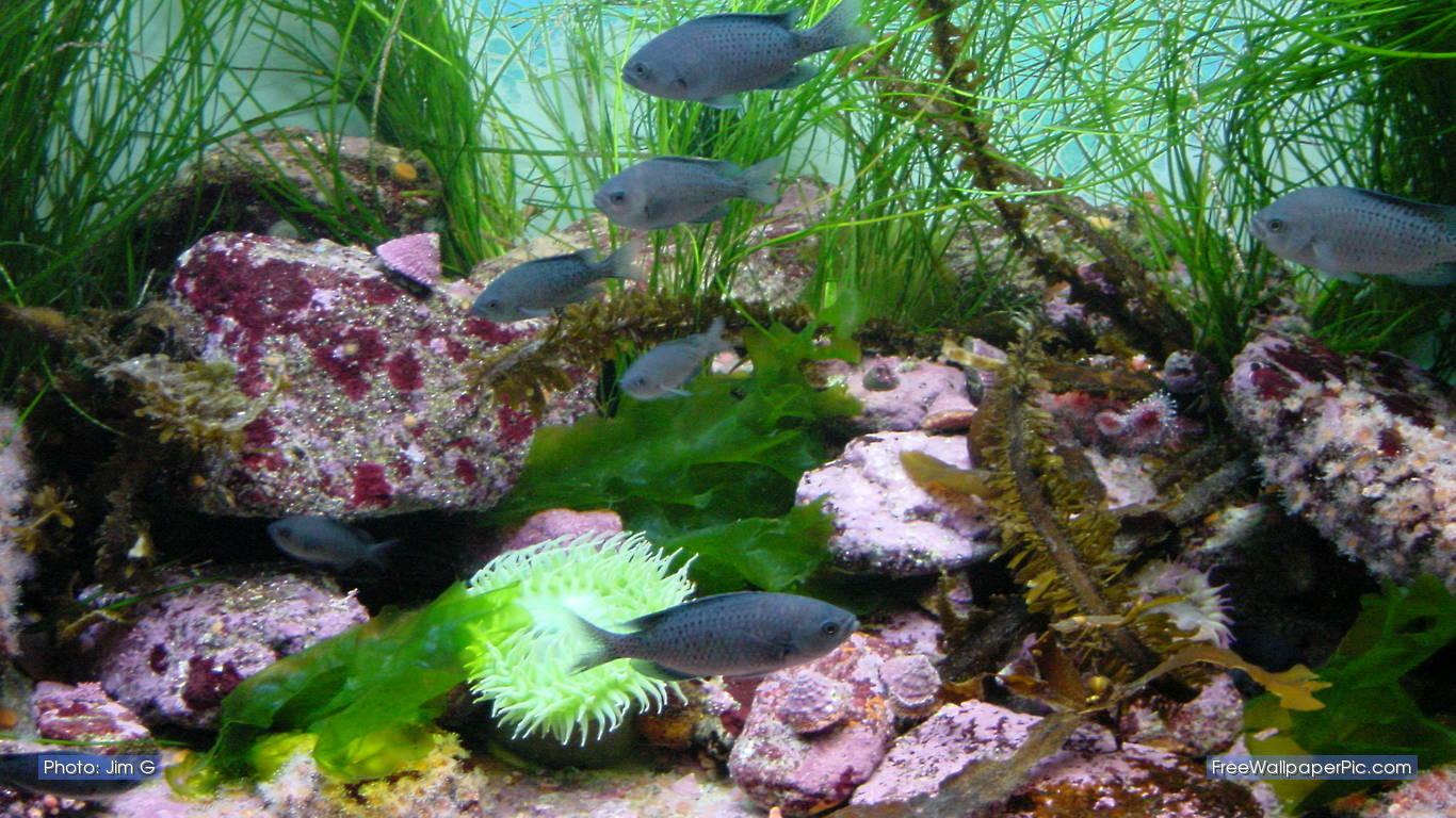 Aquarium 3D Backgrounds Download HD Wallpapers 1366x768