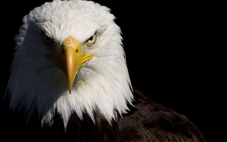 desktop wallpaper of american eagle computer desktop wallpaper 1440x900