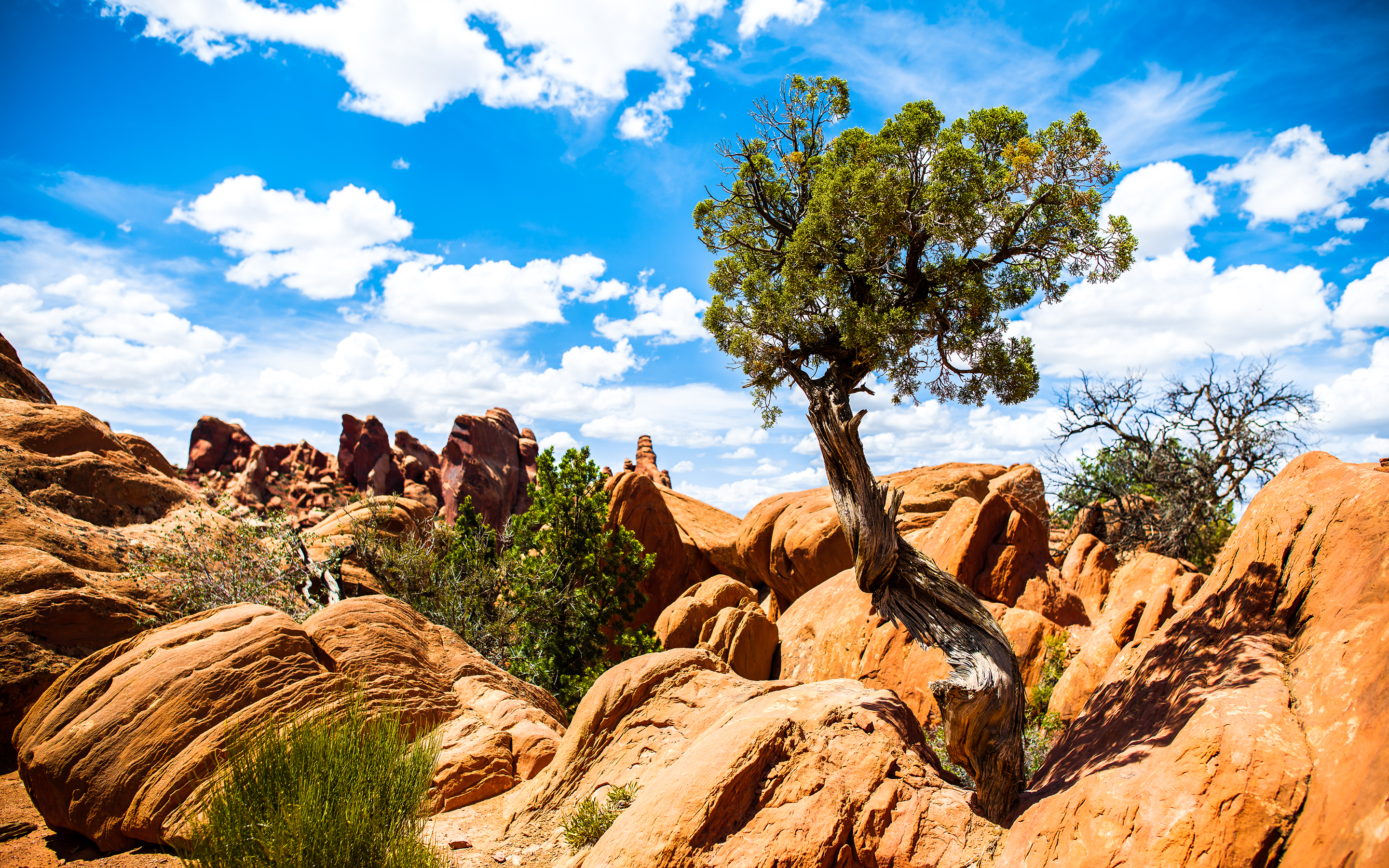 Arches National Park Wallpapers HD Wallpapers 2880x1800