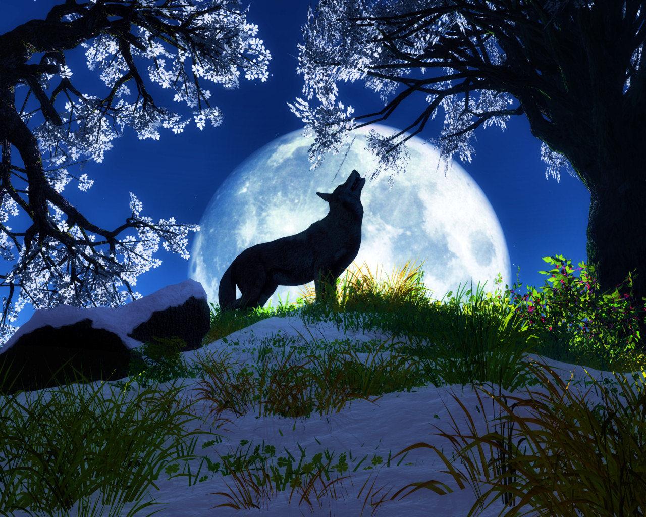 effects of wolf predation essay
