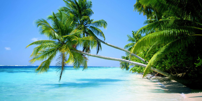 palm tree hd wallpapers nature 54 views amb wallpapers presents the 660x330