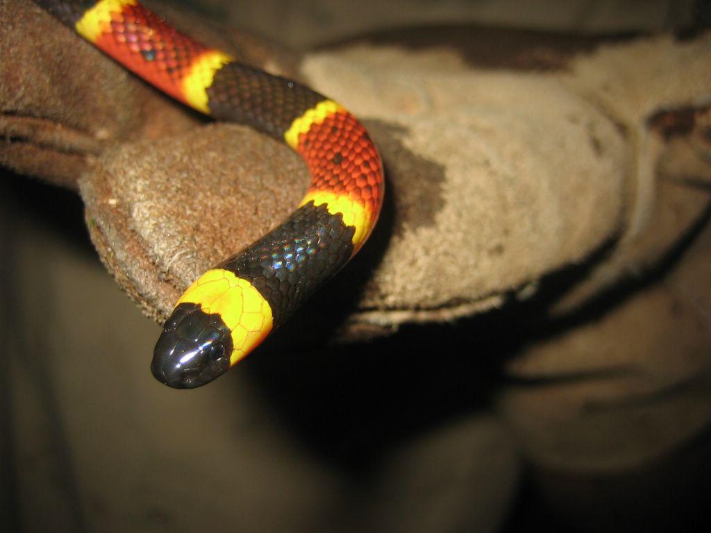 poisonous snakes 1024x768