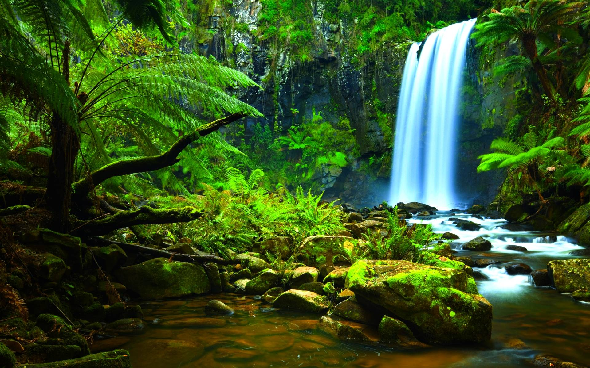rain forest background wallpapersafari