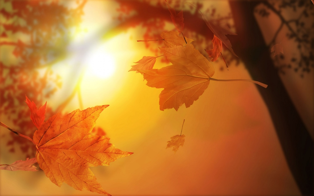 Cute Autumn Wallpaper   HQ Wallpapers download 100 high quality 1280x800