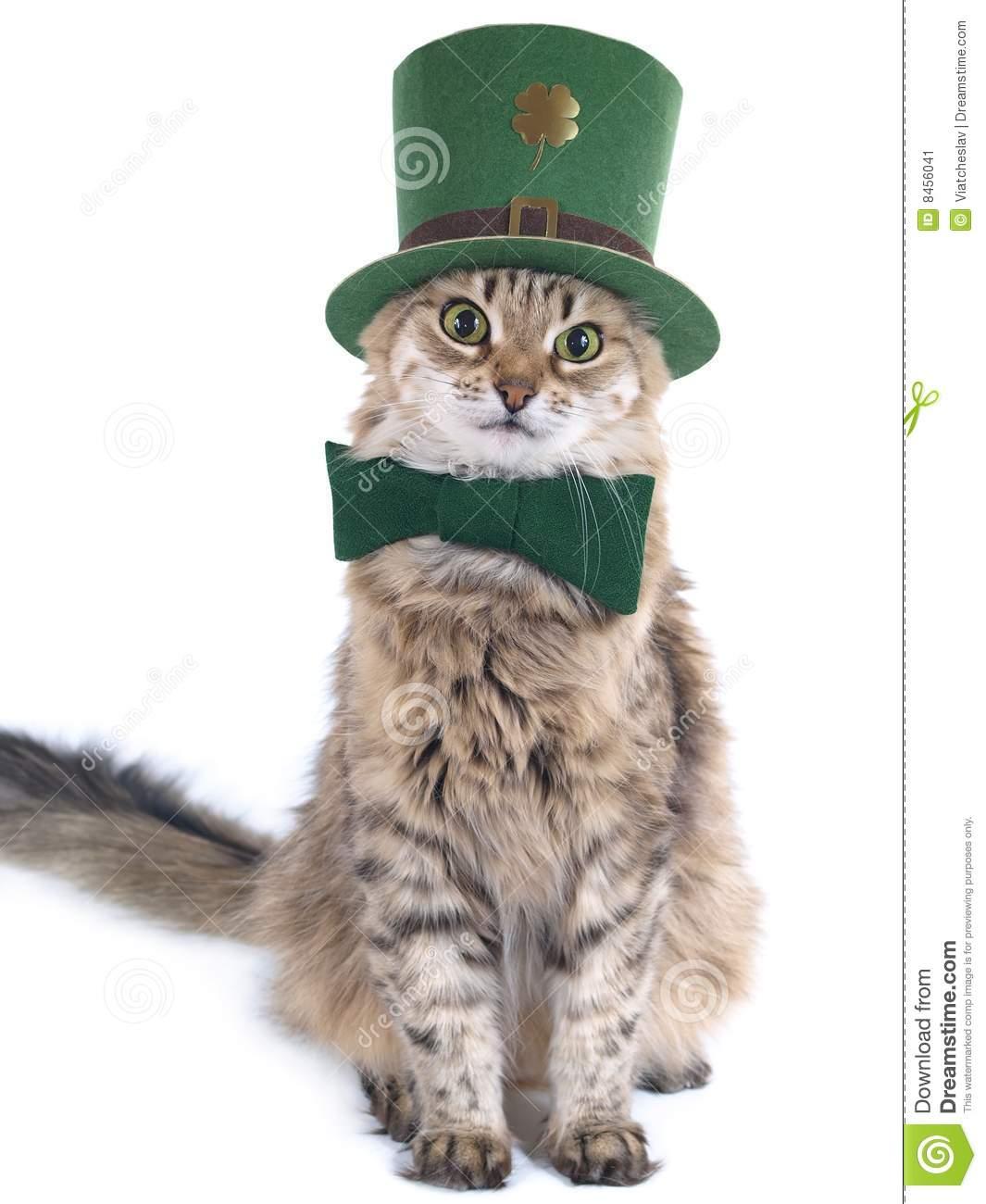 Cat Wallpapers For Iphone: [36+] St Patrick's Day Cat Wallpaper On WallpaperSafari