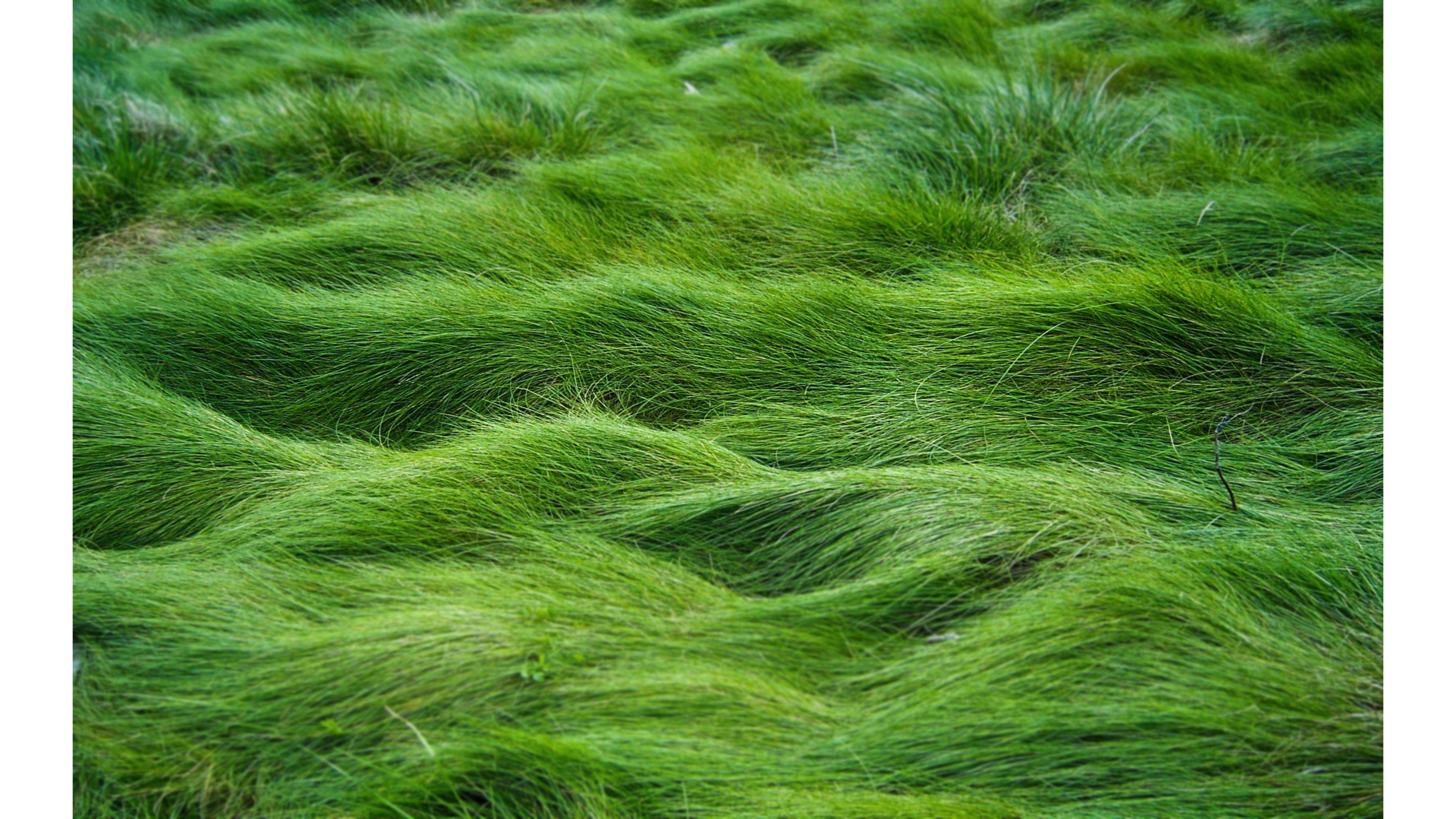 47+ 4K Wallpaper Grass on WallpaperSafari