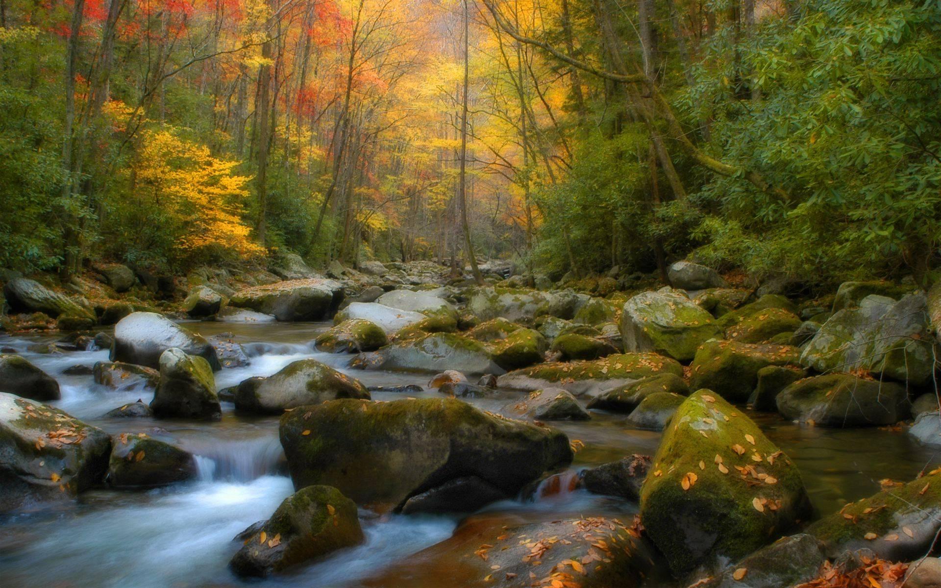 HD wallpaper Screensaver Screensavers Natural Background Nature by 1920x1200