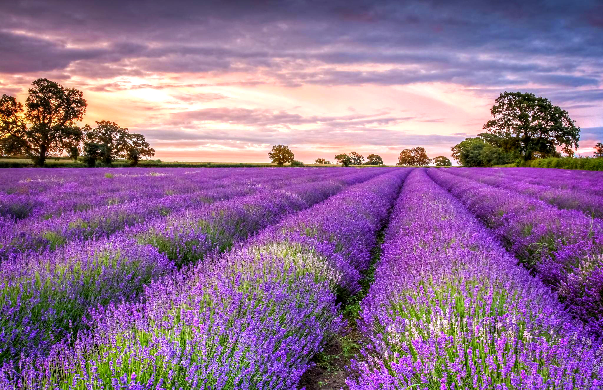 Lavender Wallpapers High Quality Download 2048x1323