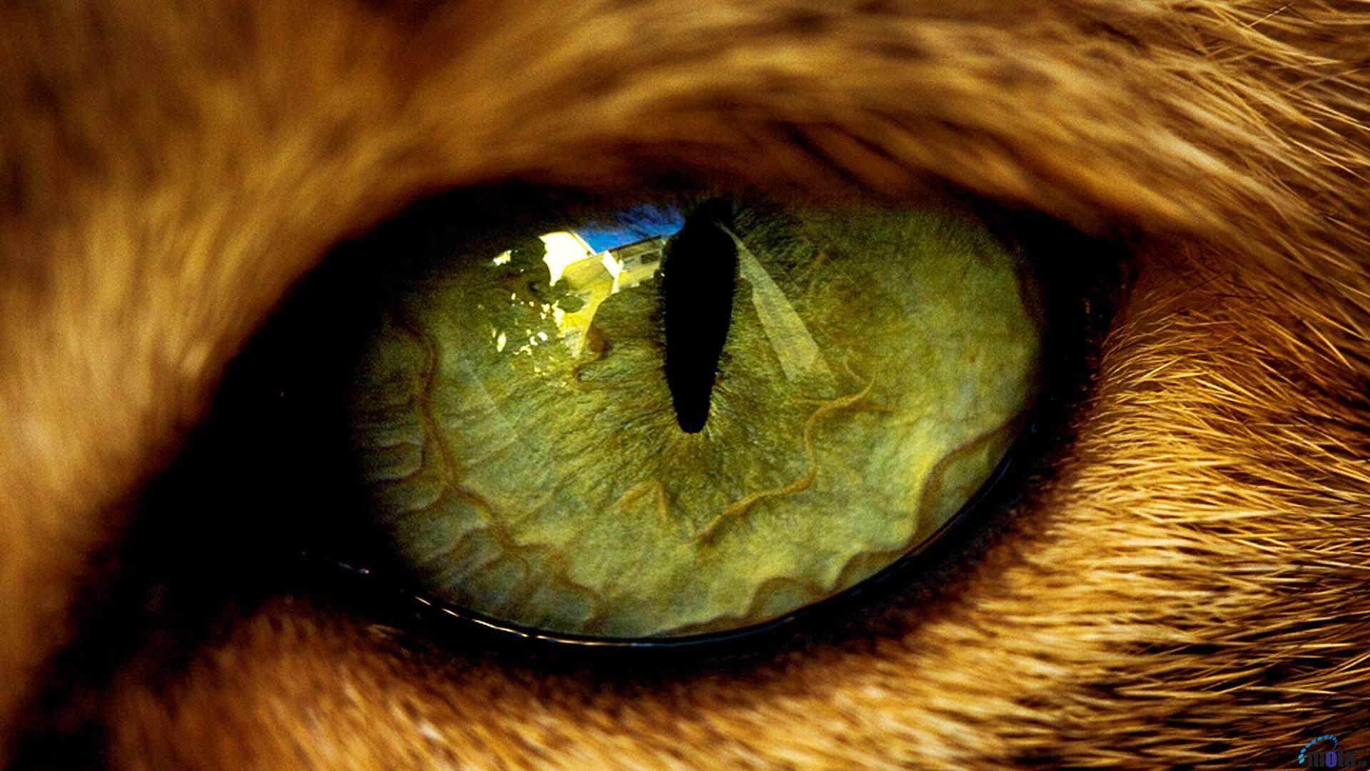 Cats Eye   Cats Wallpaper 1920x1080