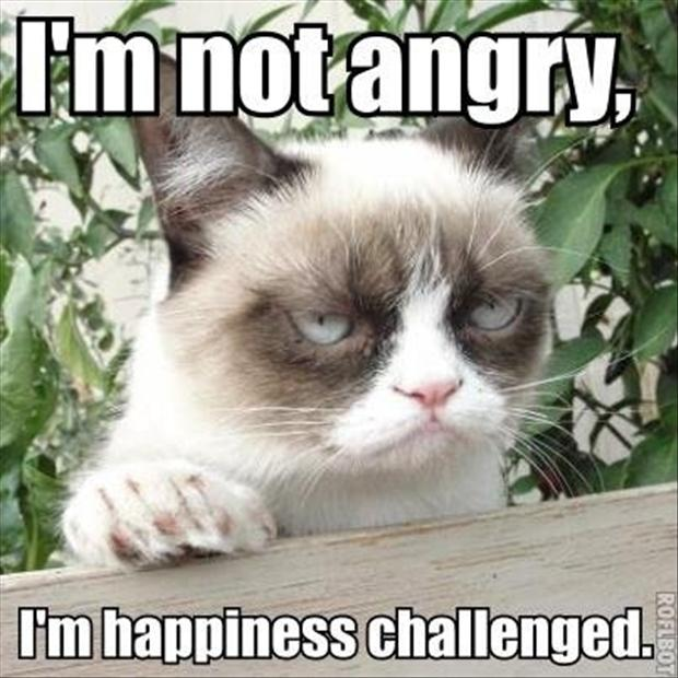 tagged with The Best Of Grumpy Cat   45 Pics 620x620